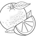 میوه خشک کن ناسوت